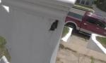 carpenter-ant-damage