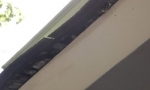 damaged-roof-sheathing