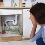Common Household Areas For Mold Growth