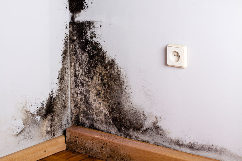 Black mold in home