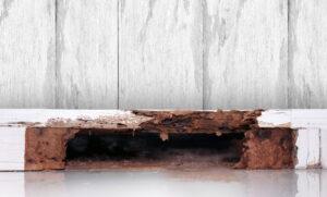 Termite Nest In Home